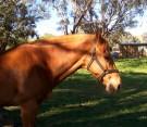 לא מחליפים סוס בעליה | חווֹת סוסים  במזרח בנימין