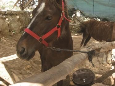 Фавориты, «Урвот Ткоа» («Стойла в Ткоа»), лошадиная ферма, Ткоа