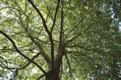 בית היערנים | יער יתיר