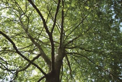 בית היערנים   יער יתיר