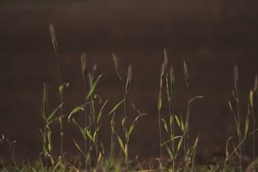 И был человек в Маоне, а имение его в Кармеле, «Эсвей кедем» («Древние травы»), натуральная косметика, Кармель