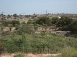 Ханаанский бальзам «Ариэль бе-Йеѓуда», элитная винодельня, Рамат-Мамре (Харсина)